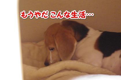 聞く耳 7