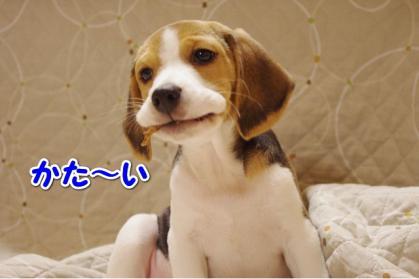 歯固め 2