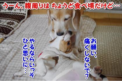 としお 6