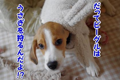 としお 4
