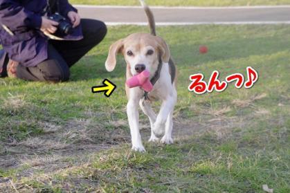 ボール 5