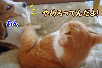嫌われ者 5