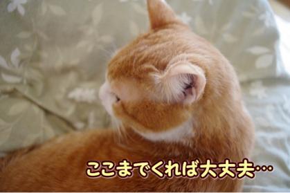 嫌われ者 1