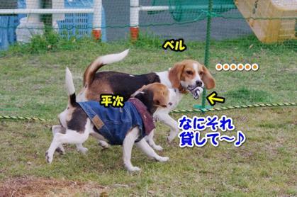 小型犬 5