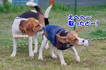 小型犬 6