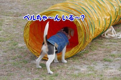 小型犬 3