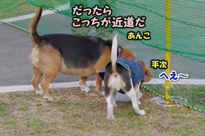 小型犬 1