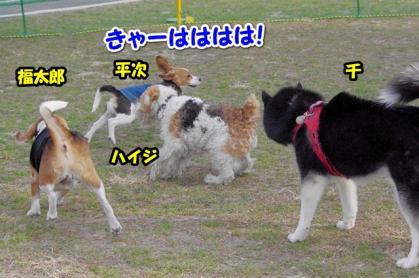 小型犬 11