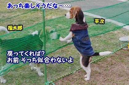 小型犬 10