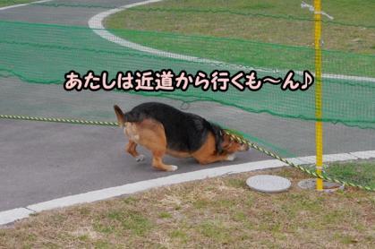 小型犬 9