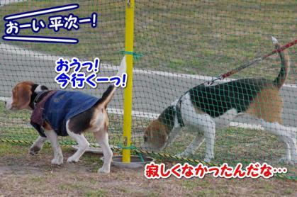 小型犬 15