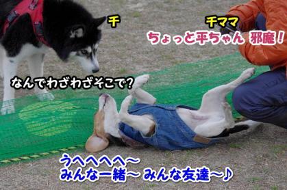 小型犬 16