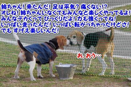 小型犬 13