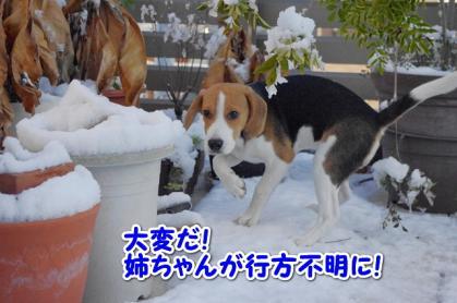 初雪 11
