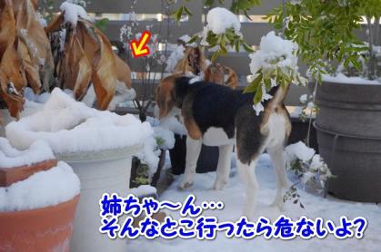 初雪 10