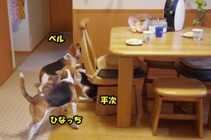 ドッグカフェ 2