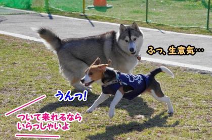 大型犬 6