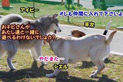大型犬 5