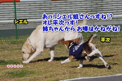 大型犬 3