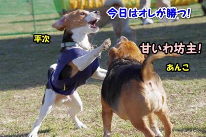 大型犬 2