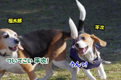 大型犬 1