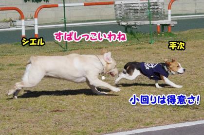 大型犬 10