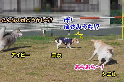 大型犬 9