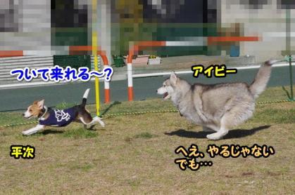 大型犬 8