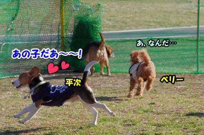 小型犬 2