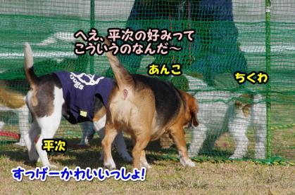 小型犬 4