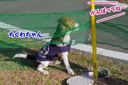 小型犬 7