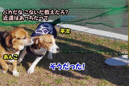 小型犬 8