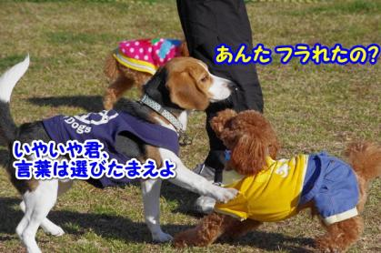 小型犬 12