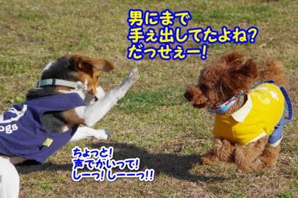 小型犬 14