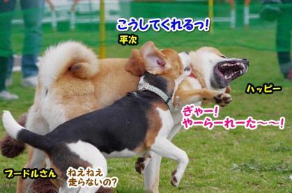 大型犬 4