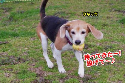 大型犬 11