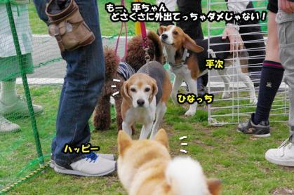 大型犬 7