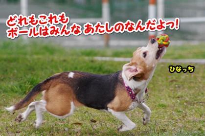 大型犬 14