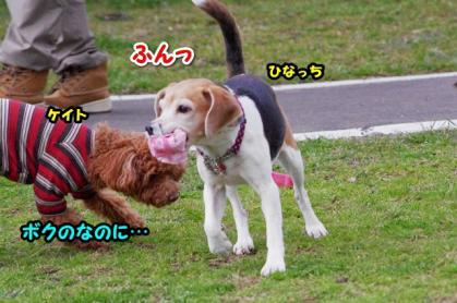 大型犬 13