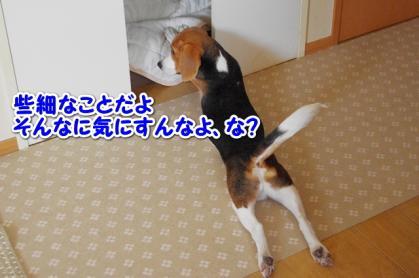 犬部屋 3