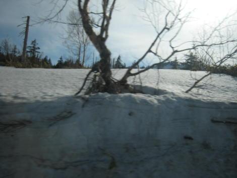 雪すごいね~