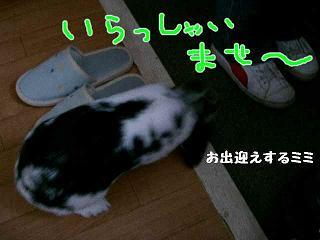 画像 4375