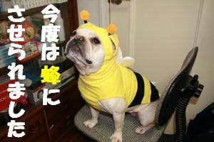 蜂さんっ!