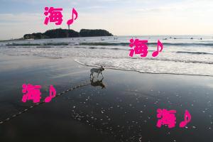 海でしゅ~