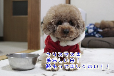 11_20111227191700.jpg