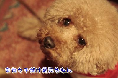16_20120317135257.jpg