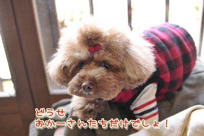 1_20120317132309.jpg