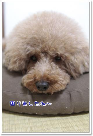 2_20110804175318.jpg