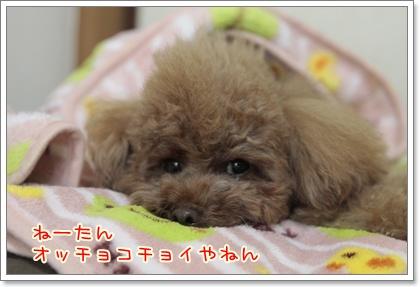 2_20111108231129.jpg