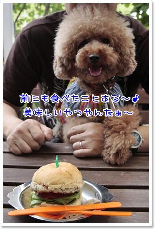 3_20110617130809.jpg